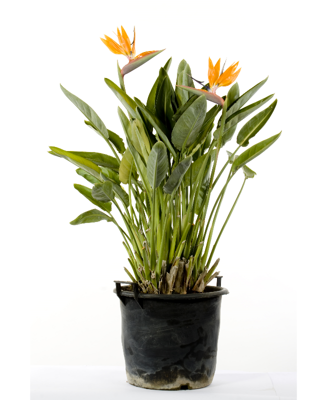 piante che crescono in fretta archivi vivai cantatore