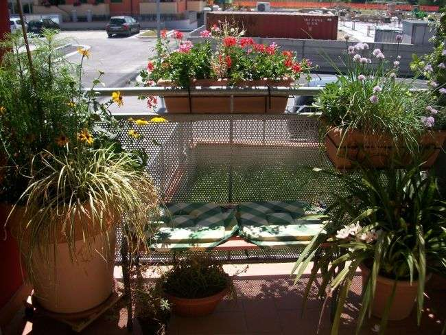 Consigli di giardinaggio coltivare le piante in terrazzo for Piante da terrazzo sempreverdi
