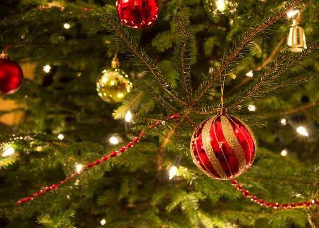 Come scegliere l'albero di natale vero ed ecologico | vivaicantatore.com