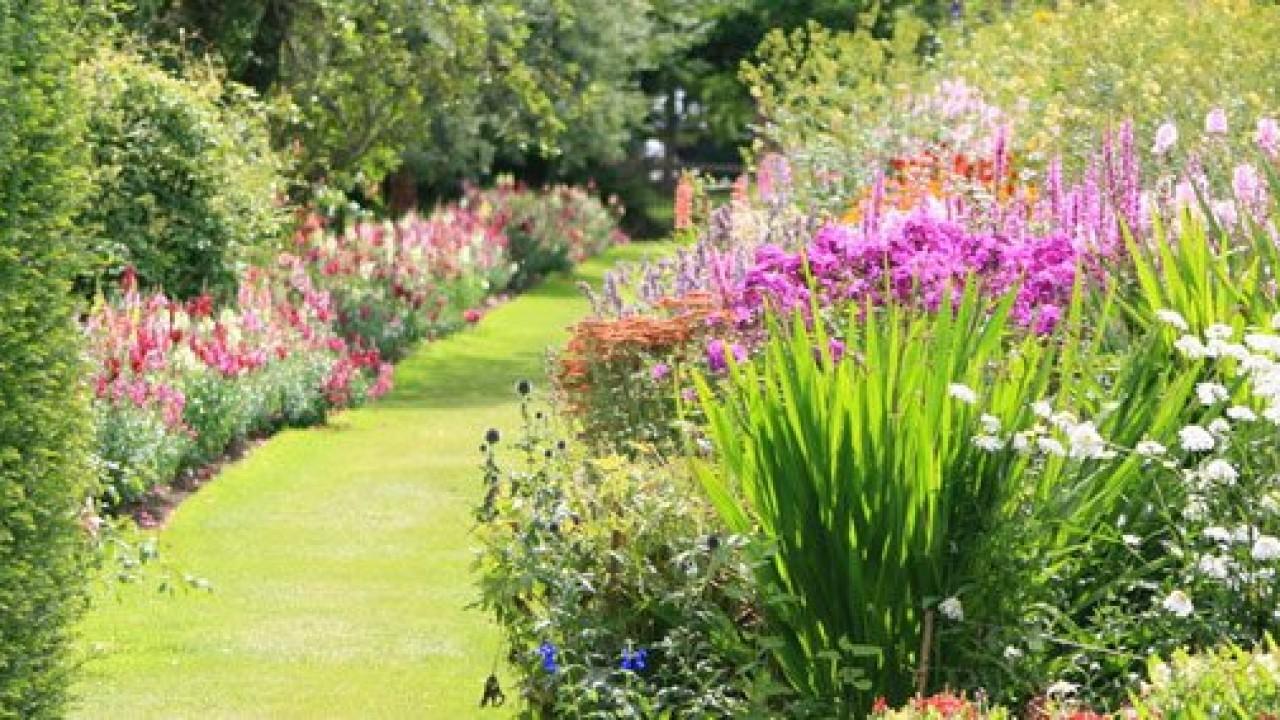 Cespugli Sempreverdi Con Fiori cespugli, aiuole e siepi: il giardino riprende vita