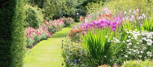 Cespugli aiuole e siepi il giardino riprende vita for Fiori per giardino perenni