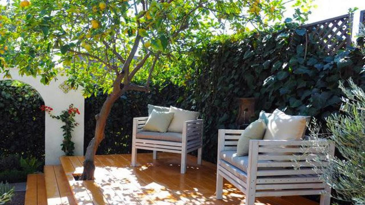 Alberi Ornamentali Da Giardino alberi da frutto, per un giardino che non sia solo fioritura