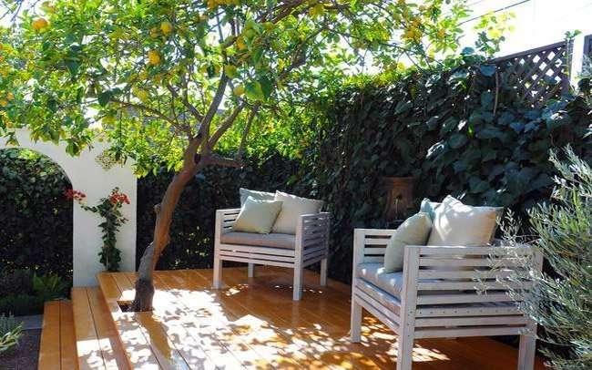 Alberi da frutto per un giardino che non sia solo fioritura - Foto di alberi da giardino ...