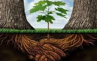 alberi-comunicano