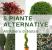 5-piante-alternative-all-albero-di-natale_vivai-cantatore