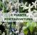 3-piante-portafortuna