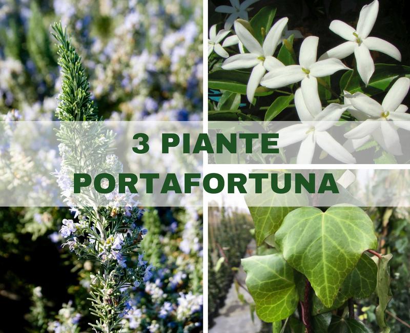 3 piante portafortuna per un 2018 strepitoso - Piante portafortuna ...