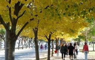 alberi-in-città