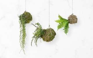 String Garden 02