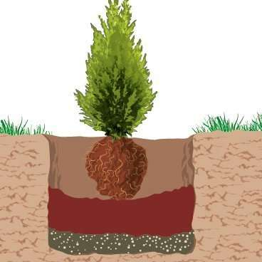 radici-albero-natale_02