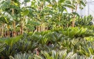 giardino-sostenibile-01
