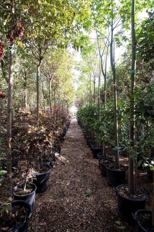 giardino-sostenibile-02
